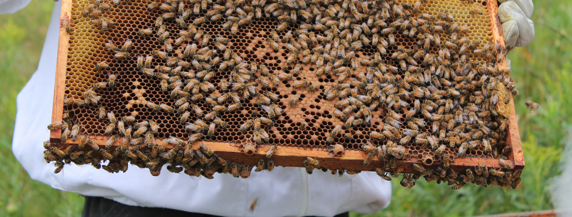 bees_0798