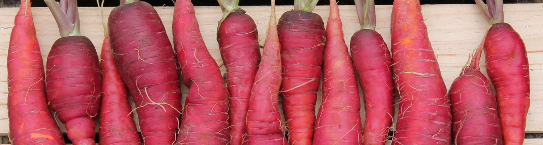 bck-carrot-cosmic_0759