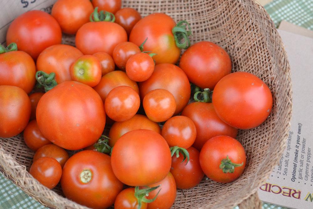 tomatoes_1773