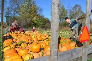 Pumpkin Harvest at We Grow LLC