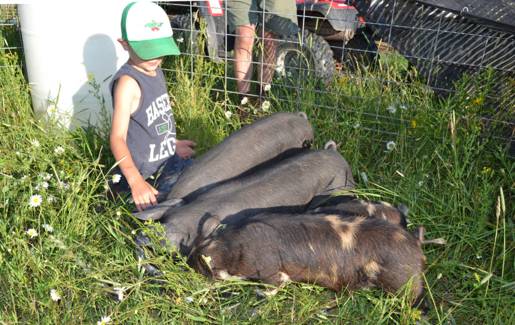 Idaho Pasture Pigs and Large Black Hogs at We Grow LLC