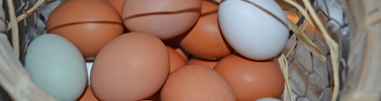 eggs_1913