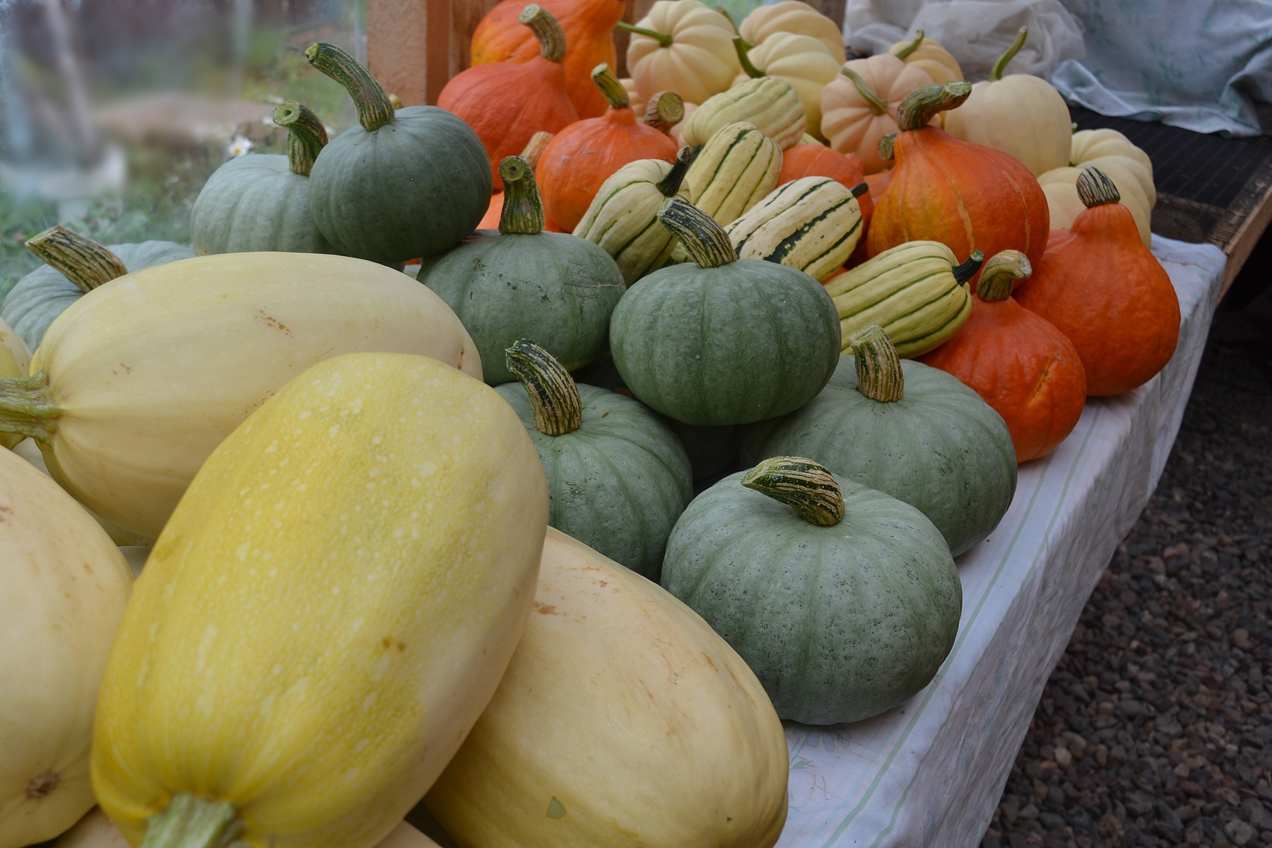 We Grow Winter Squash curing