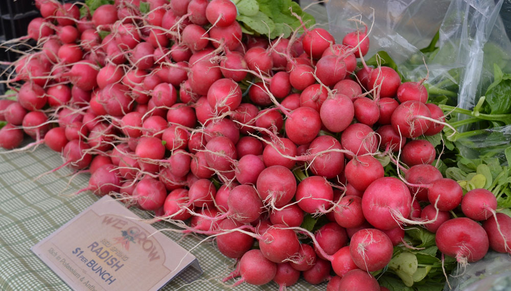 Radishes at We Grow LLC