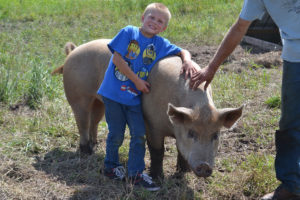 Tamworth boar at We Grow LLC
