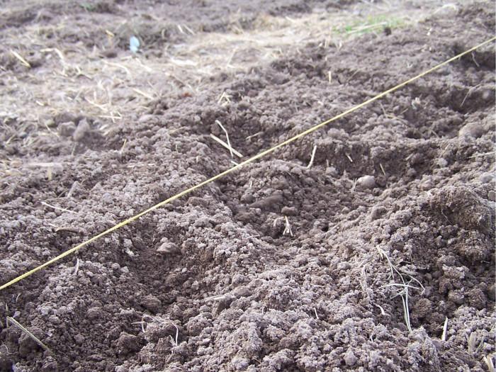 Preparing the soil for planting spring 2014.