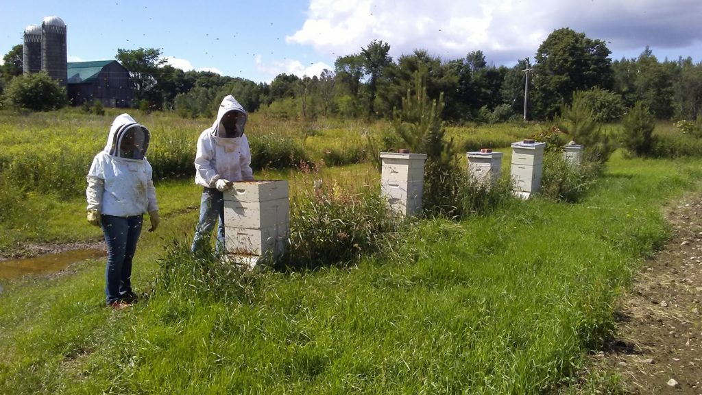 Working with honeybees at We Grow LLC