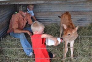 Bull calves at We Grow LLC