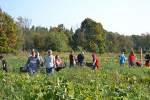Medford Middle School Ag Ed Students harvesting winter squash at We Grow